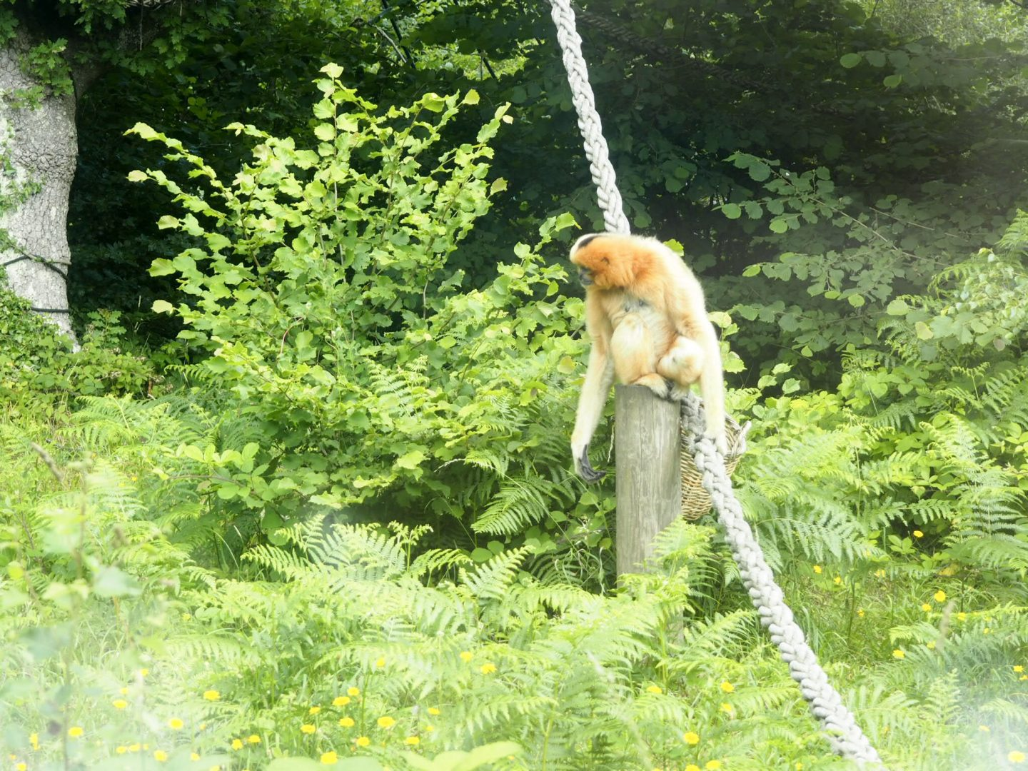 Monkey World in Weymouth
