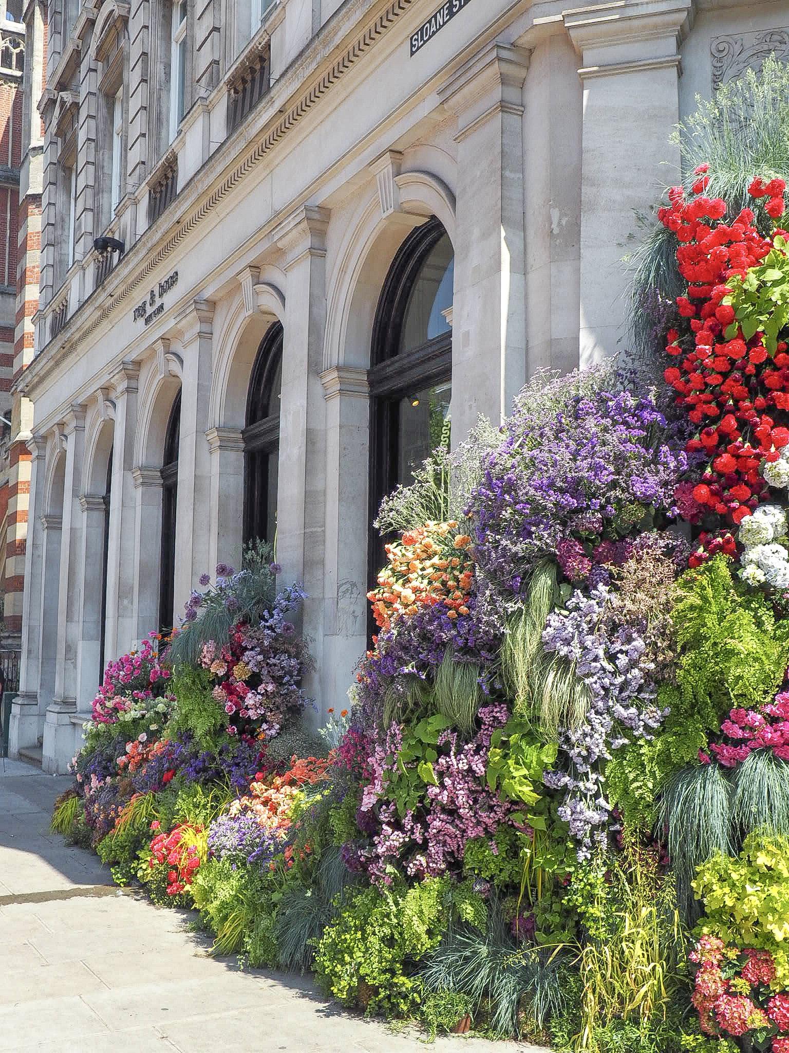 Frida's Belgravia in Bloom